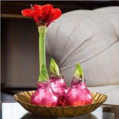 Розовая луковица Happy bulb