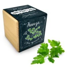 Набор для выращивания кинзы Ecocube Black