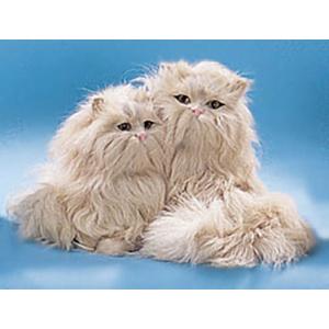 Кошки  Персидские