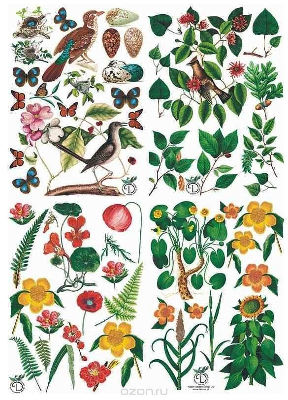 Бумага для декупажа Craft Premier Ботаника