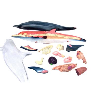Модель «Дельфин»