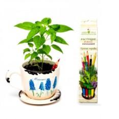 Растущие цветные карандаши Пряные травы