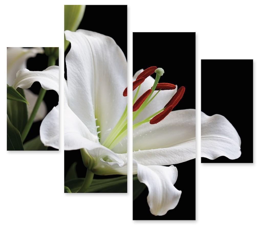 Модульная картина Белая лилия