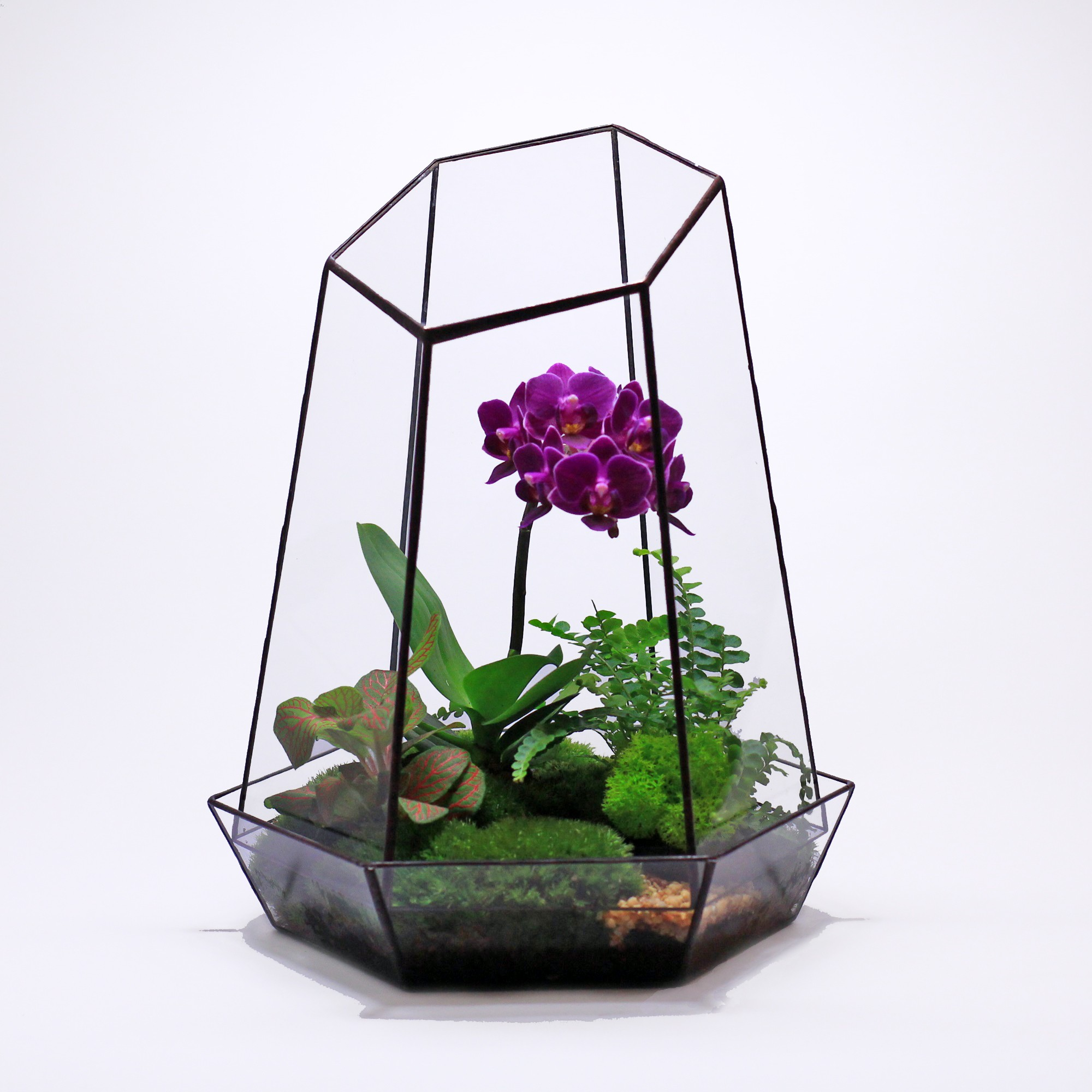 Флорариум Орхидея