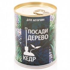 Набор для выращивания Кедр-дерево для мужчин