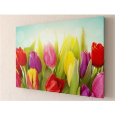 Фотокартина Солнечные тюльпаны