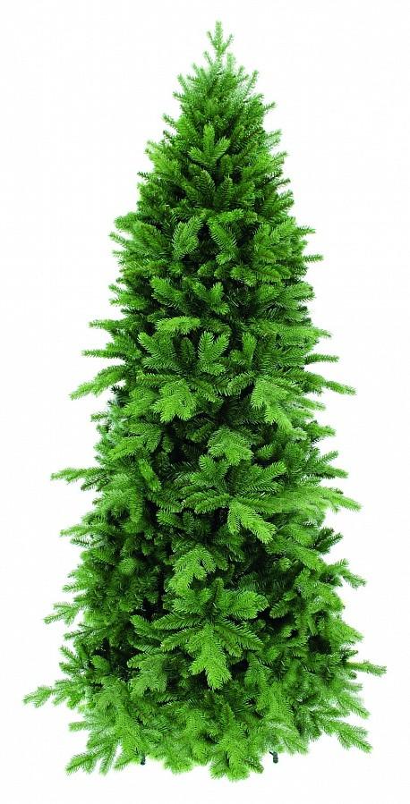 Сосна Триумф Изумрудная, зеленая, 365 см