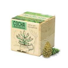 Набор для выращивания Ecocube Сосна