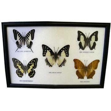 Коллаж «Бабочки»