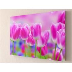 Фотокартина Розовые тюльпаны