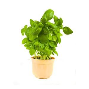 Мини-набор «Юный садовник»