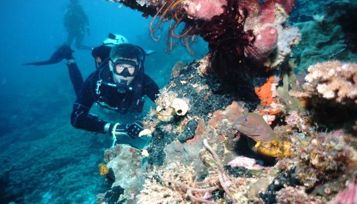 Сертификат Курс SSI Scuba Diver в клубе Одиссей