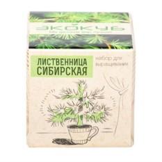 Эко куб для выращивания Лиственница сибирская