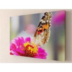 Фотокартина Бабочка монарх