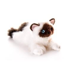 Мягкая игрушка Aurora Кошка Сиамская