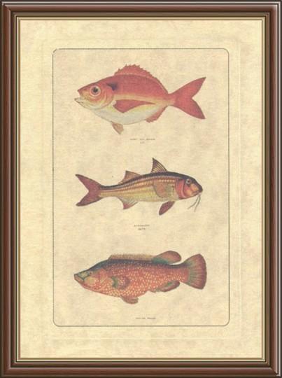 Постер в раме Рыбы
