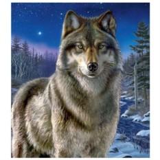 Картина-раскраска по номерам на холсте Волк