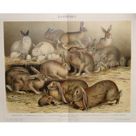 Литография «Кролики»