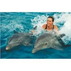 Свободное плавание с дельфинами (выходные)