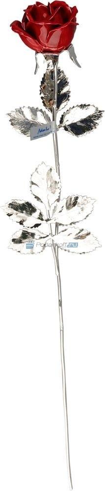 Серебряная роза алая