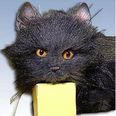 Настоящий кот - черный