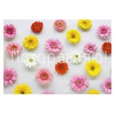 Открытка с цветочками Поздравляю