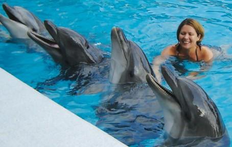 Подарочный сертификат на Плавание с дельфинами