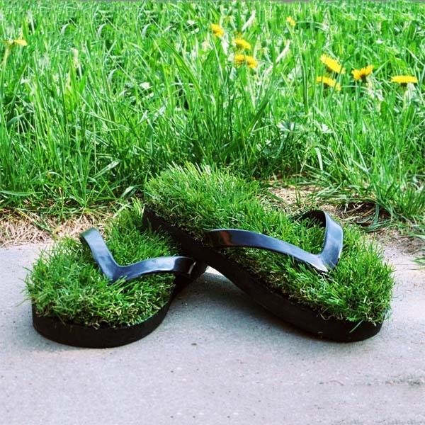 Сланцы трава Травотапки
