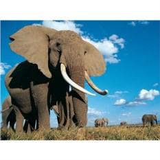 Большой напольный пазл-головоломка Слон
