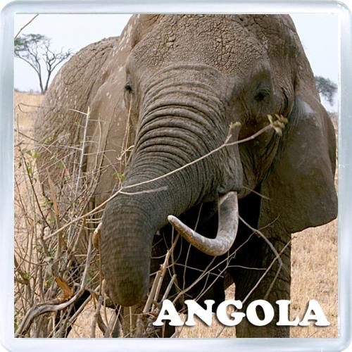 Магнит на холодильник: Ангола. Африканский слон