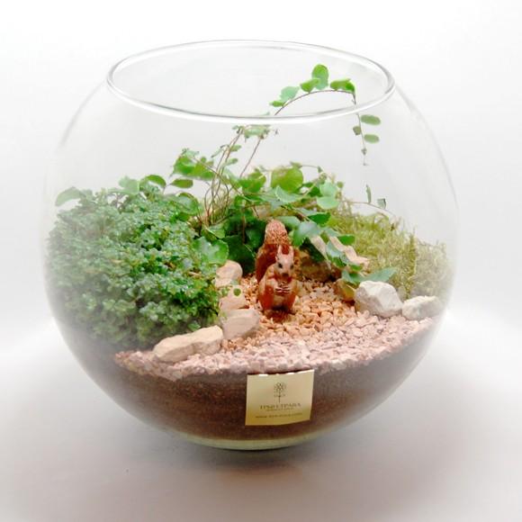 Флорариум (даваллия, пилея, солейролия, мох)