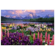 Картина-раскраска по номерам на холсте Долина цветов