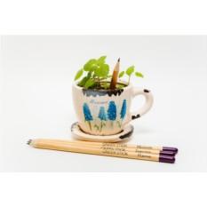 Набор из 3 карандашей Растущие карандаши. Пряные травы