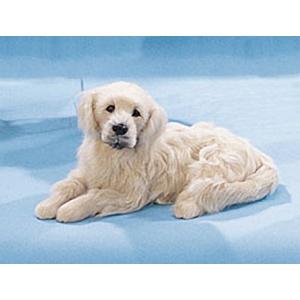 Собака Золотой Ретривер