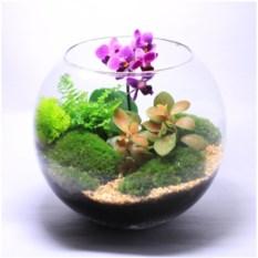Флорариум Сад орхидей