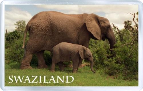 Магнит на холодильник: Свазиленд. Африканский слон
