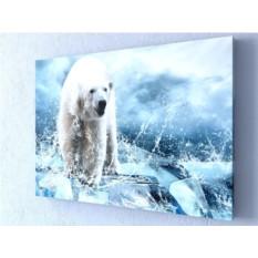 Фотокартина Белый медведь