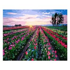 Картины по номерам «Поле тюльпанов»