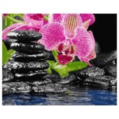 Картина-раскраска по номерам Орхидея