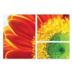 Модульная картина Летний цветок