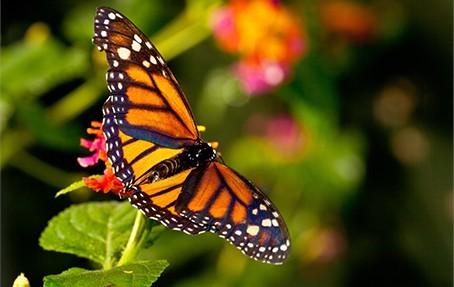 Подарочный сертификат Музей живых бабочек для двоих