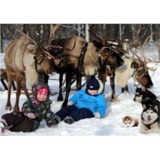 Сертификат Поездка на оленью ферму: 2 взрослых и 2 ребенка