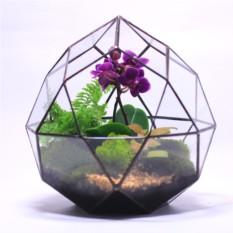 Сад в стекле(флорариум) Нежность
