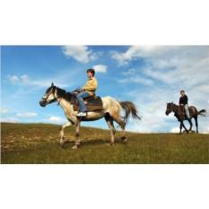Двухдневный конный тур в Костромской области