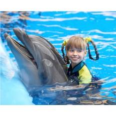 Эксклюзивное плавание с дельфинами (выходные)