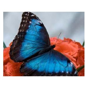 Свидание среди бабочек