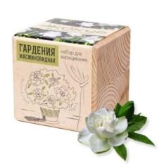 Набор для выращивания Гардения жасминовидная