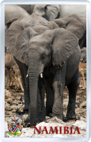 Магнит на холодильник: Намибия. Африканский слон