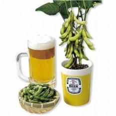 Набор для выращивания стручкового горошка Edamame