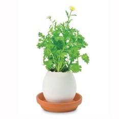 «Мини-хризантема в скорлупке». Набор для выращивания